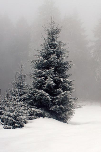 والپیپر زمستانی