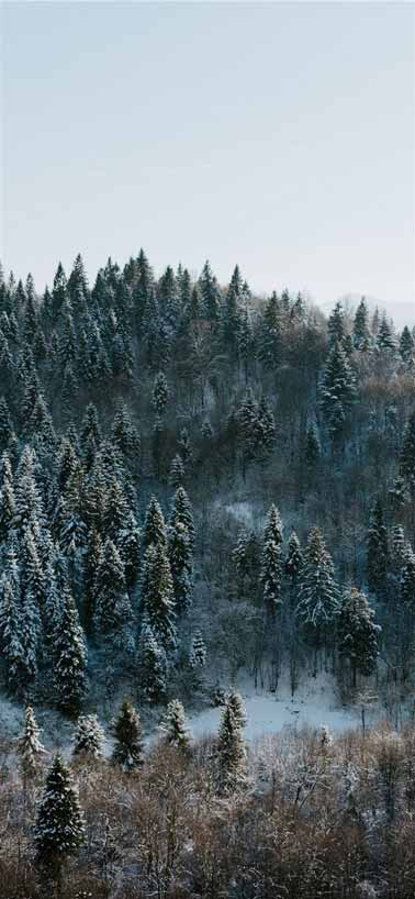 بک گراند زمستان - تکست زمستانی