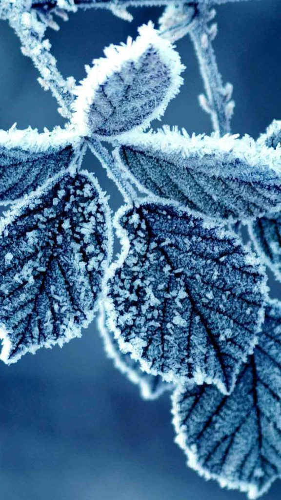 بک گراند زمستانی hd