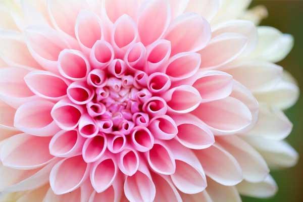 والپیپر و تصویر زمینه های گل زیبا و شیک