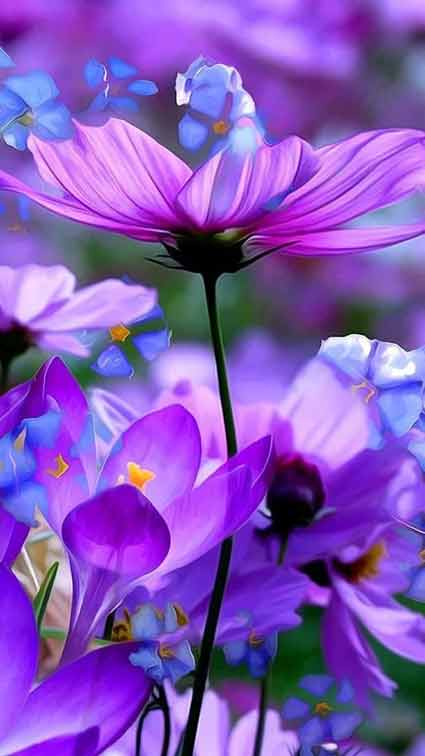 تصویر زمینه گل
