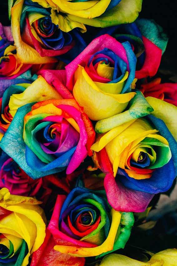 عکس زمینه گل رنگی رنگی