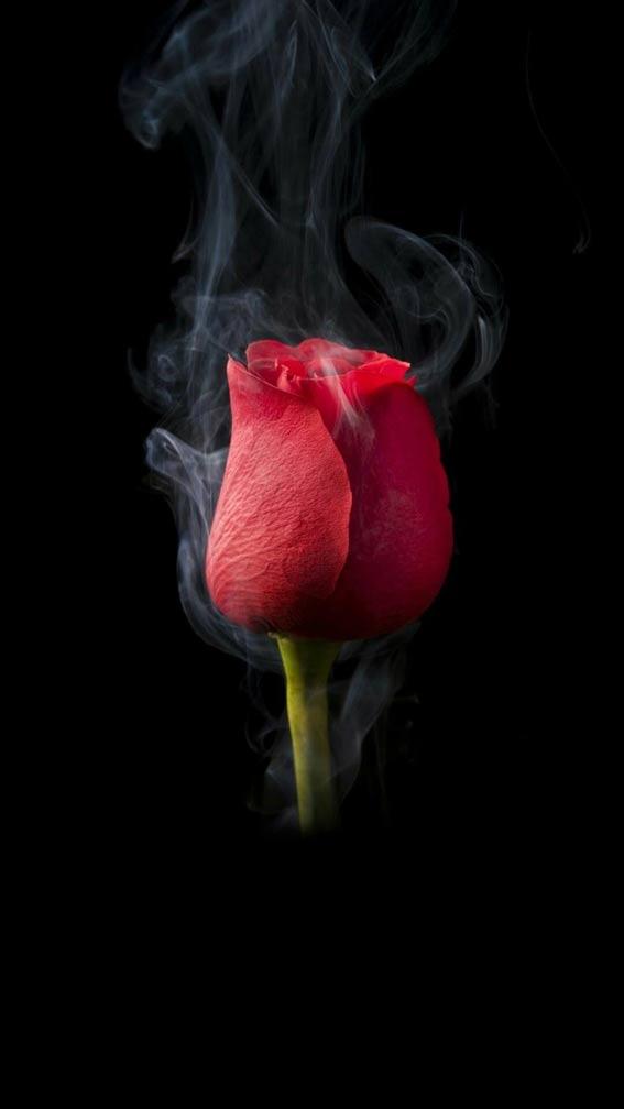 بک گراند گل زیبا
