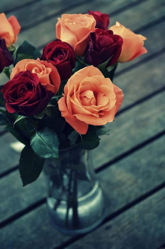 والپیپر عکس گل زیبا