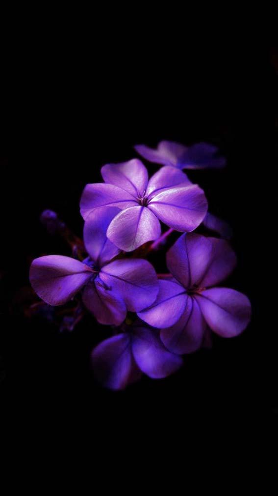 والپیپر گل