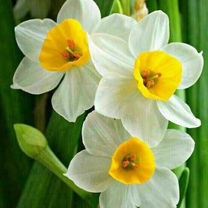 عکس پروفایل گل یاس