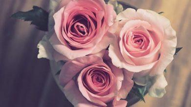 عکس پروفایل گل رز (قرمز، آبی، سفید، زرد، سبز، صورتی و...)