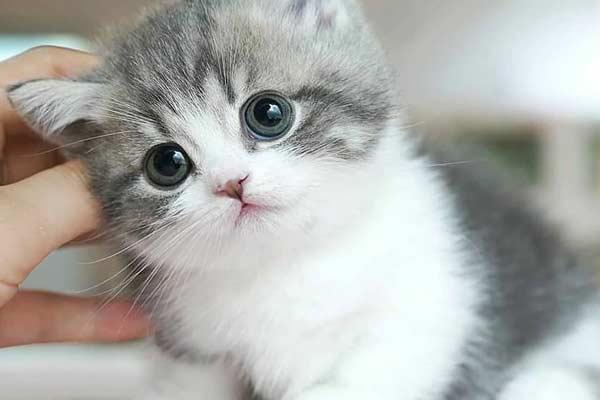 والپیپر و بک گراند گربه