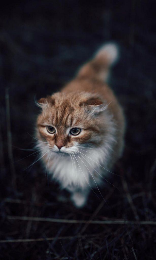 پس زمینه گوشی موبایل گربه ای