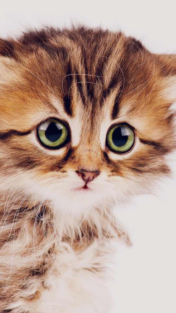 بک گراند و والپیپر بچه گربه ملوس