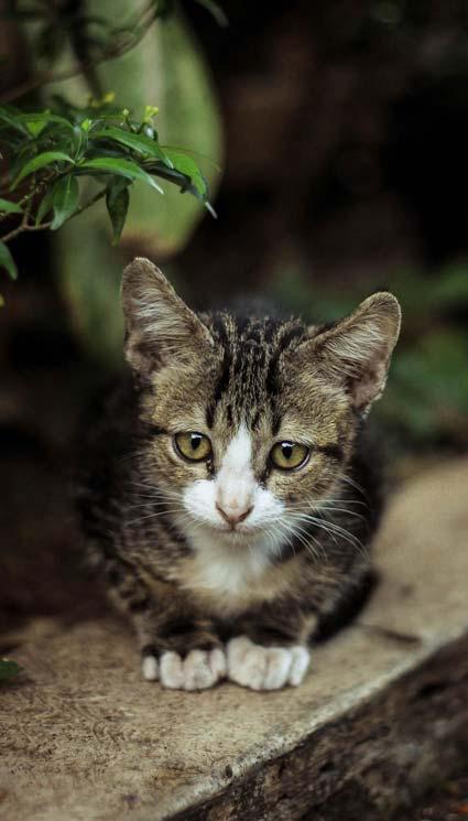 والپیپر و بک گراند گربه ملوس