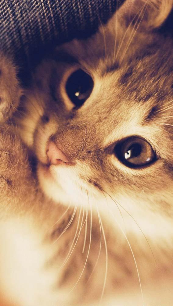والپیپر گربه ناز