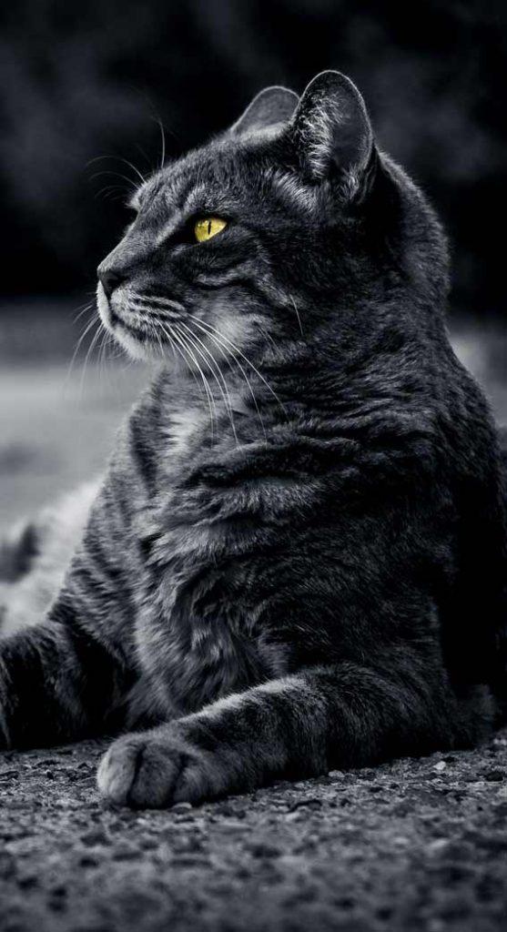 بک گراند عکس گربه
