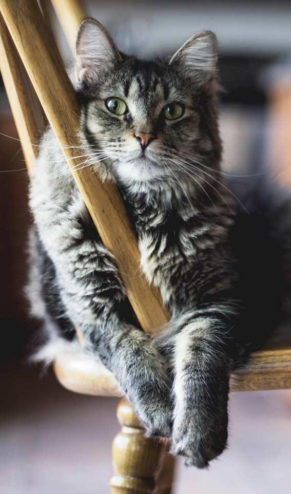 والپیپر گربه