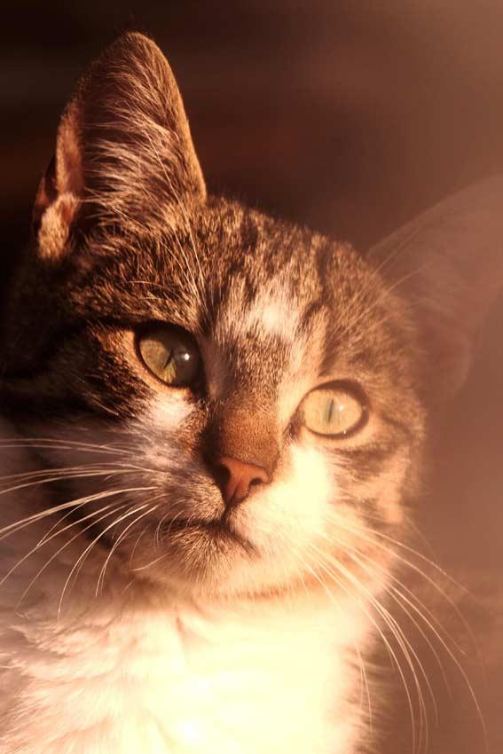 والپیپر گربه زیبا و قشنگ