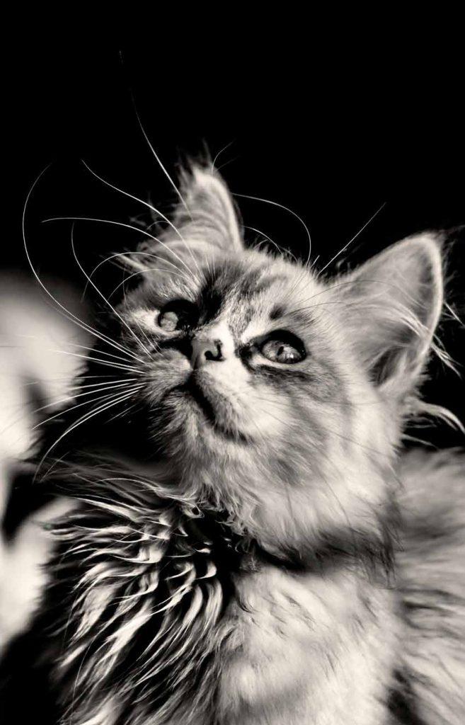 والپیپر گربه خفن