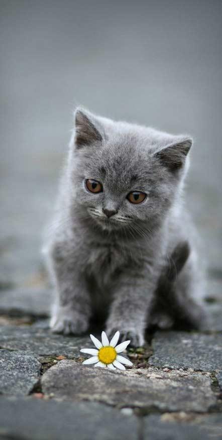 بک گراند گربه برای گوشی