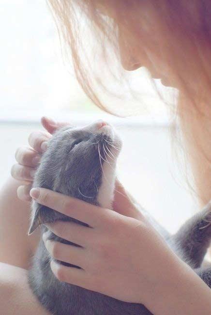 والپیپر گربه زیبا