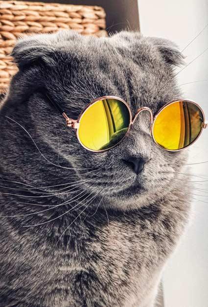 والپیپر و بک گراند گربه عینکی