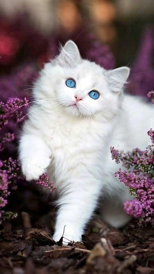 والپیپر و بک گراند گربه سفید