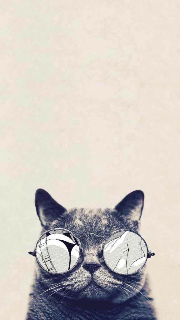 والپیپر گربه عینکی