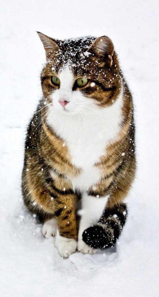 تصویر زمینه گربه برای بک گراند