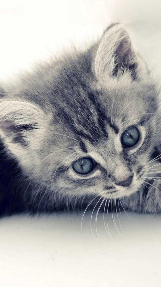 والپیپر بچه گربه زیبا