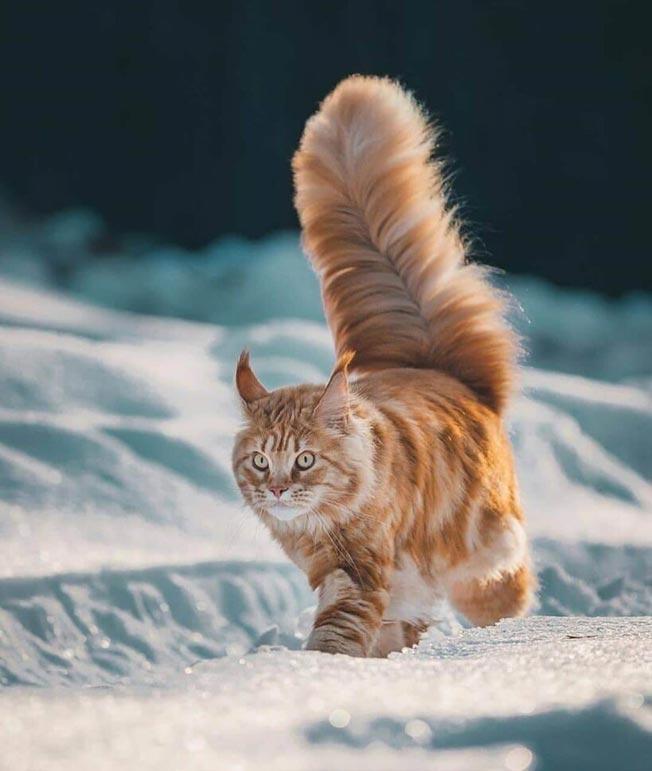 عکس پروفایل گربه دخترونه و پسرانه