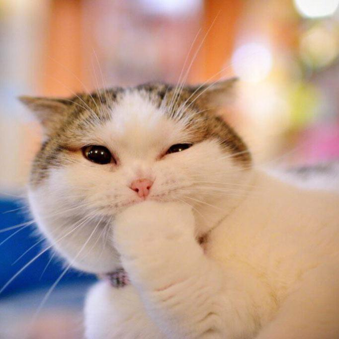 پروف گربه ملوس