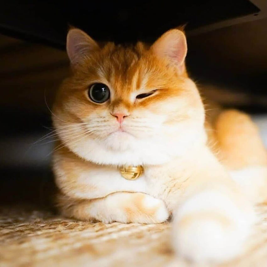 عکس گربه ناز و ملوس