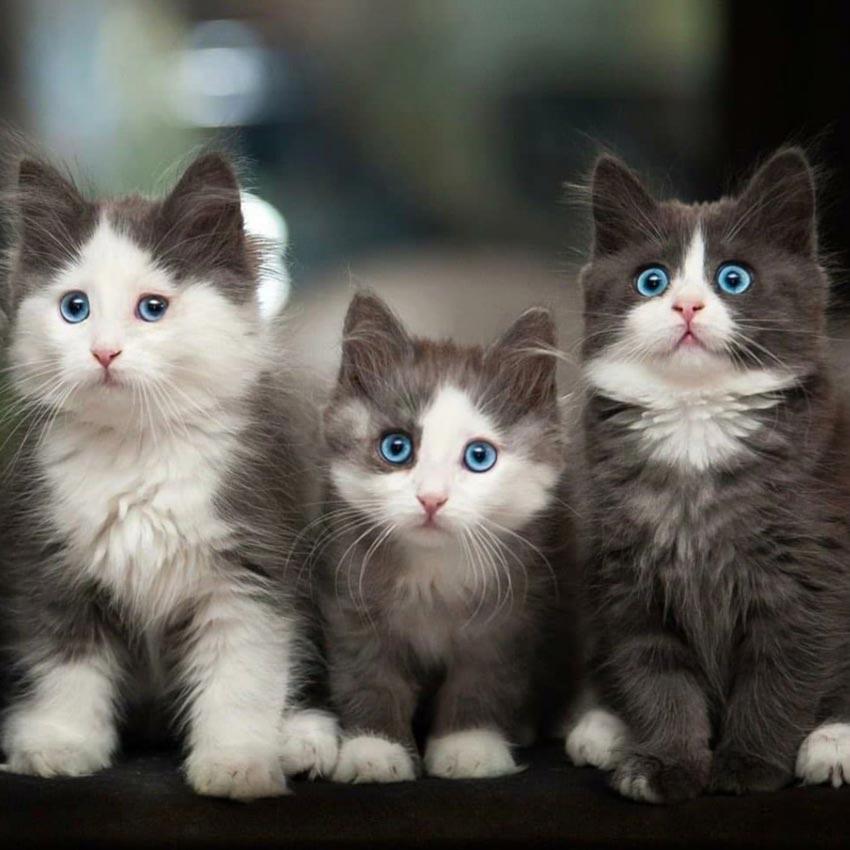 عکس گربه باحال