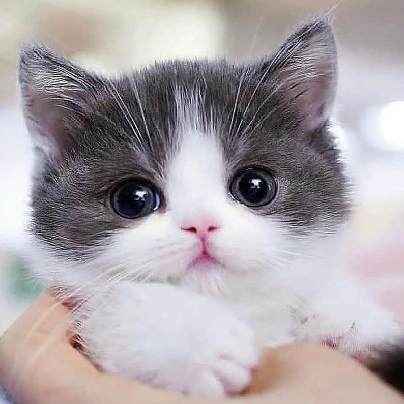 عکس بچه گربه برای پروفایل