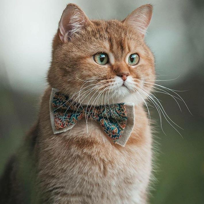 عکس گربه | عکس پروفایل گربه شیک و لاکچری