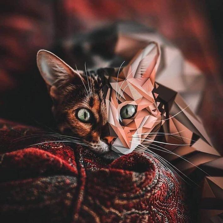 عکس پروفایل گربه خاص و زیبا
