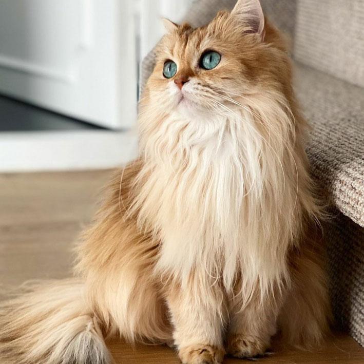 عکس گربه برای پروفایل
