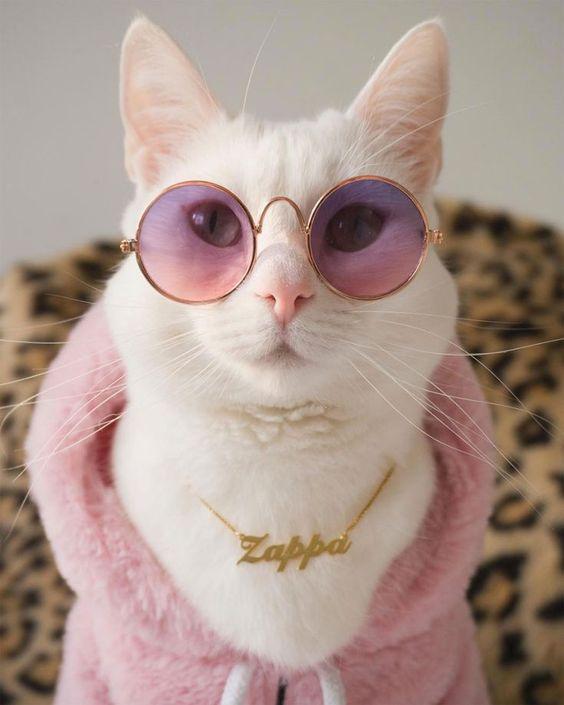 عکس پروفایل گربه ناز و ملوس