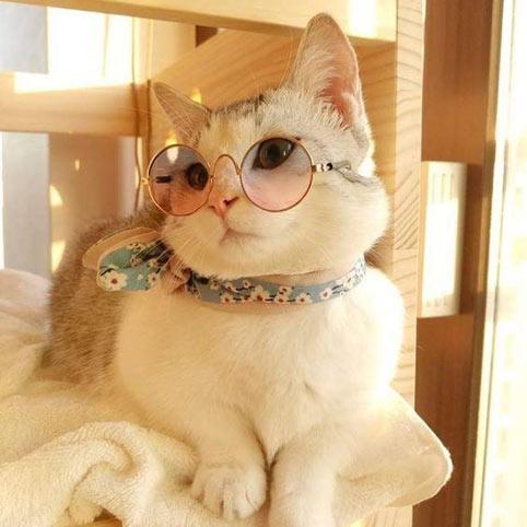 عکس گربه زیبا و قشنگ