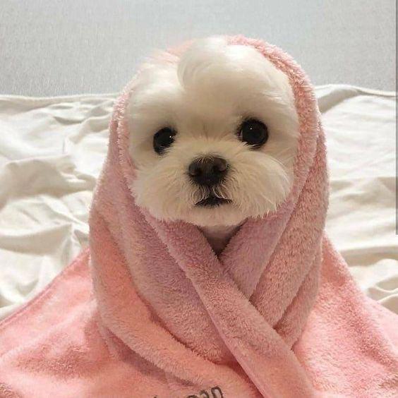 عکس سگ کیوت